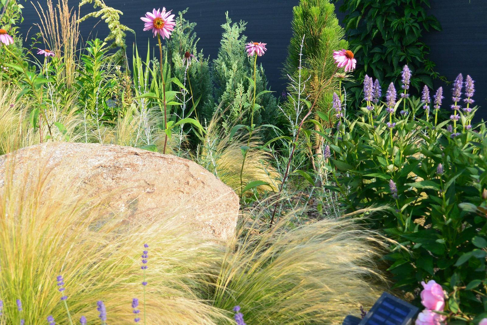 Motýlí zahrada 2019-2020 - Levandule, Perovskie, Echinacea a Agastache hmyz miluje...