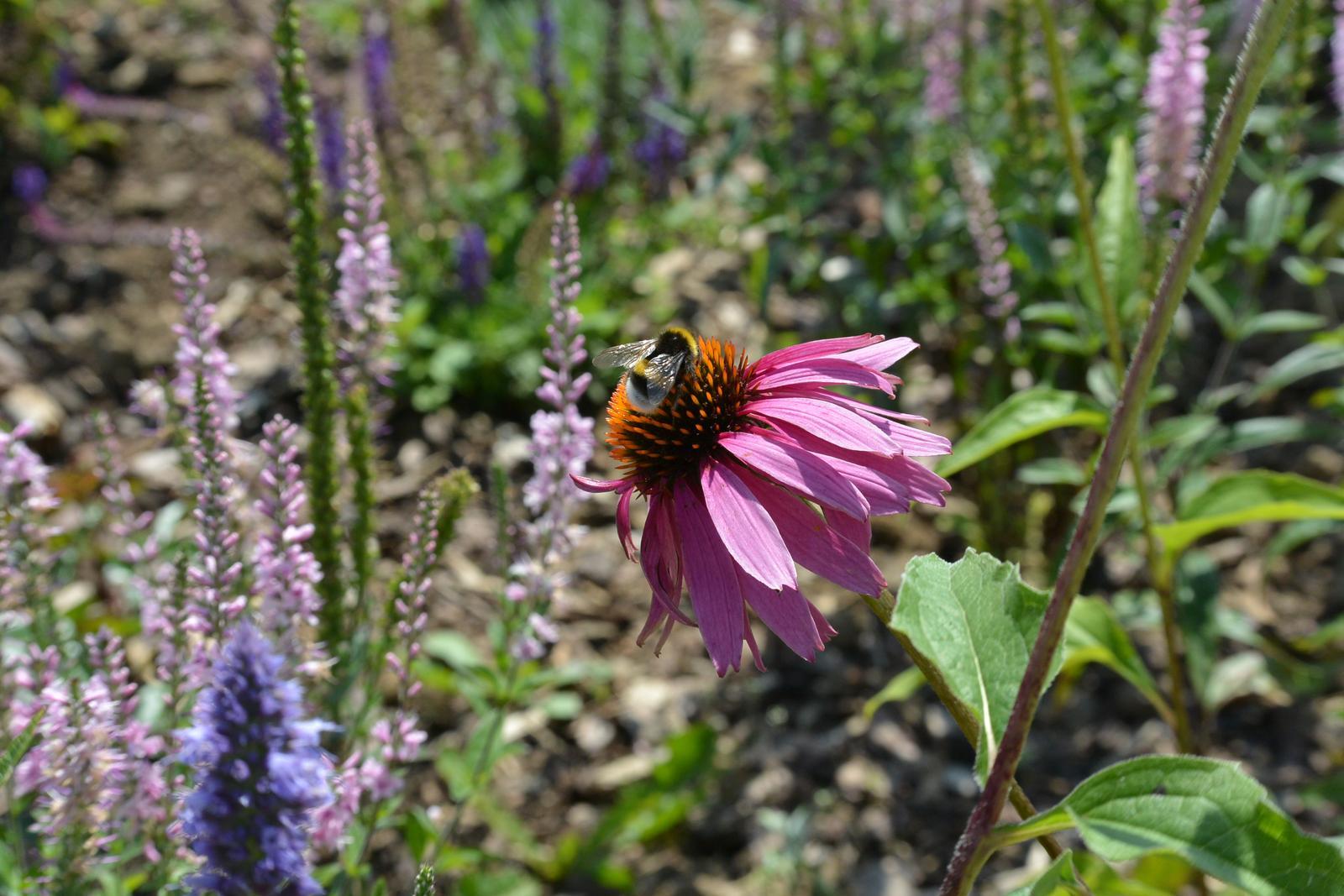 Motýlí zahrada 2019-2020 - Obrázek č. 14