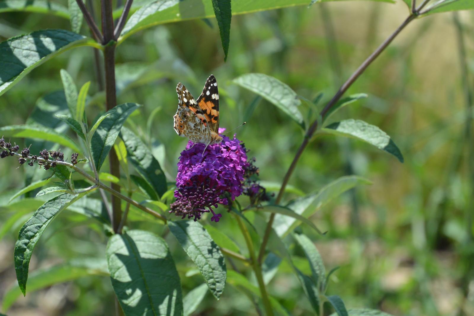 Motýlí zahrada 2019-2020 - Obrázek č. 15