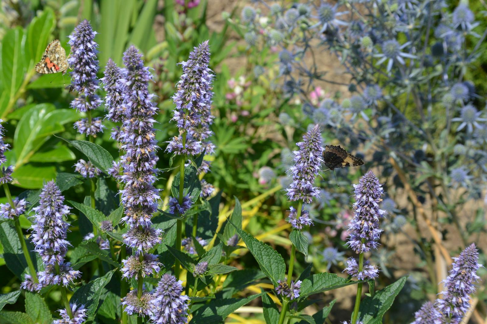 Motýlí zahrada 2019-2020 - Obrázek č. 17