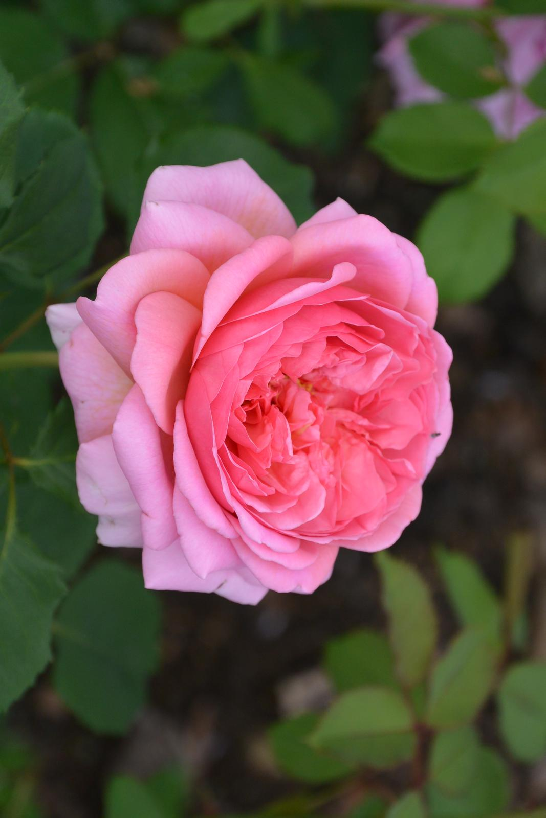 Motýlí zahrada 2019-2020 - Princess Alexandra of Kent
