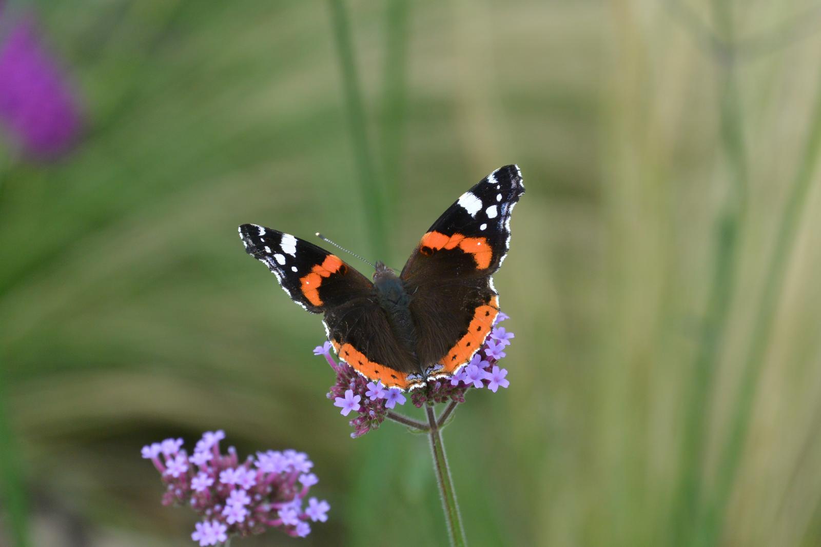 Motýlí zahrada 2019-2020 - Obrázek č. 54