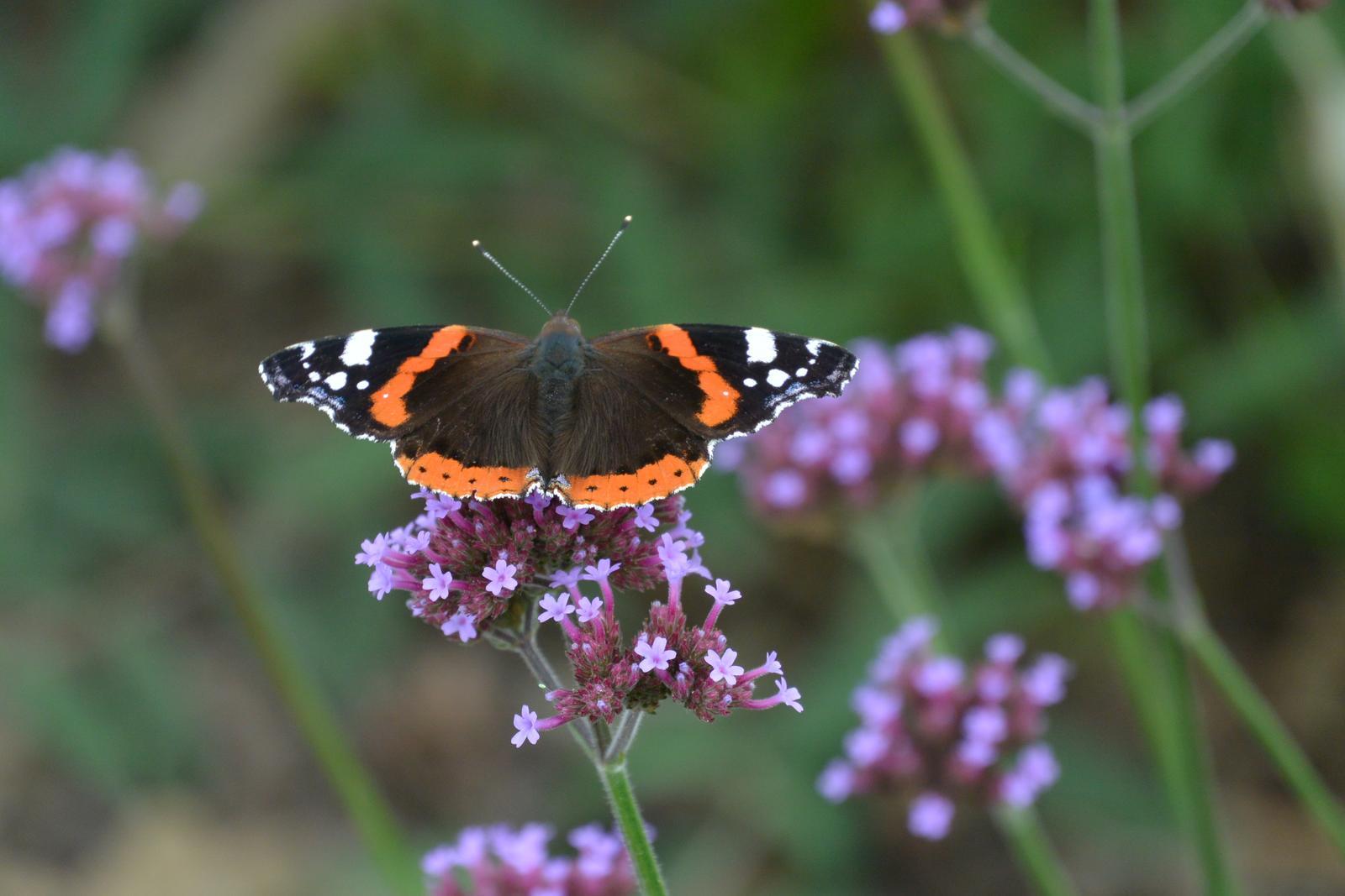 Motýlí zahrada 2019-2020 - Obrázek č. 55