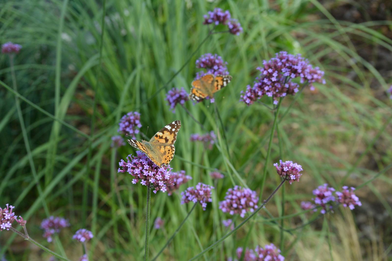 Motýlí zahrada 2019-2020 - Obrázek č. 58