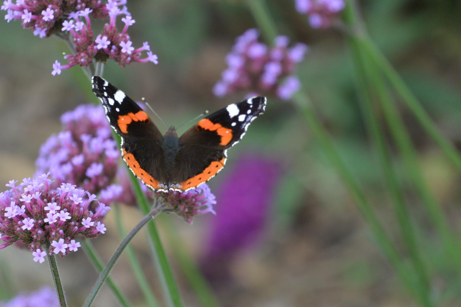 Motýlí zahrada 2019-2020 - Obrázek č. 59