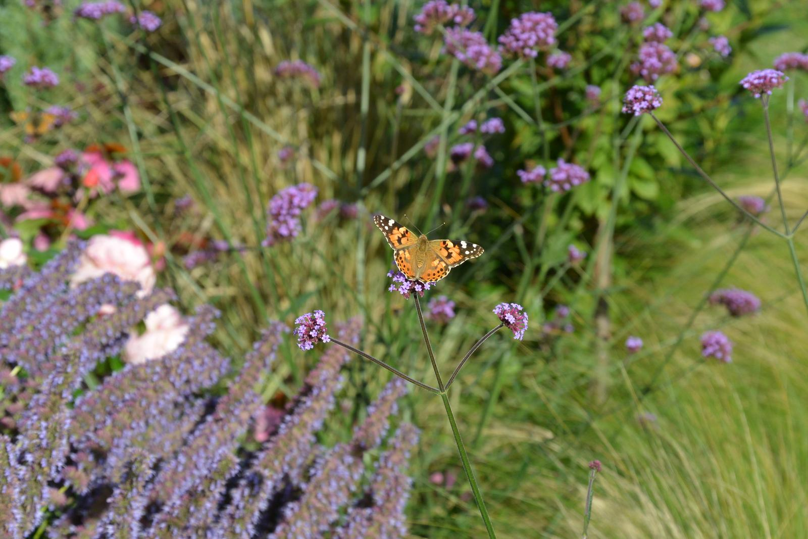Motýlí zahrada 2019-2020 - Obrázek č. 109