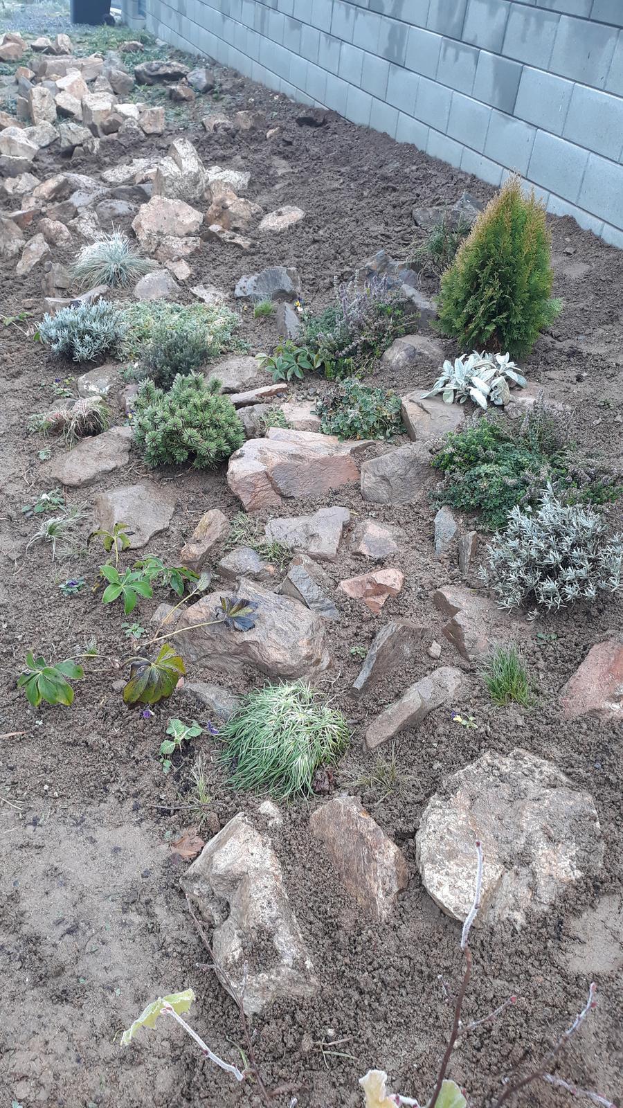 Motýlí zahrada 2019-2020 - Sehnali jsme kameny od sousedů na skalku.