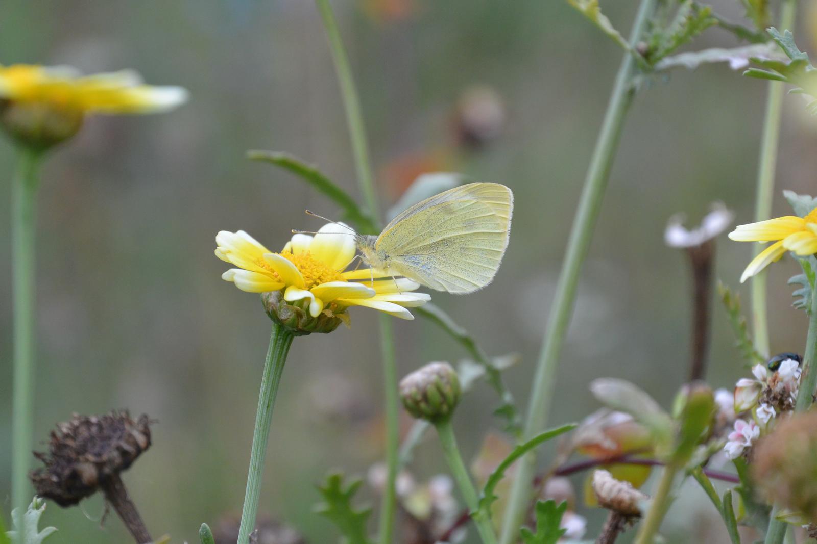 Motýlí zahrada 2019-2020 - Obrázek č. 106