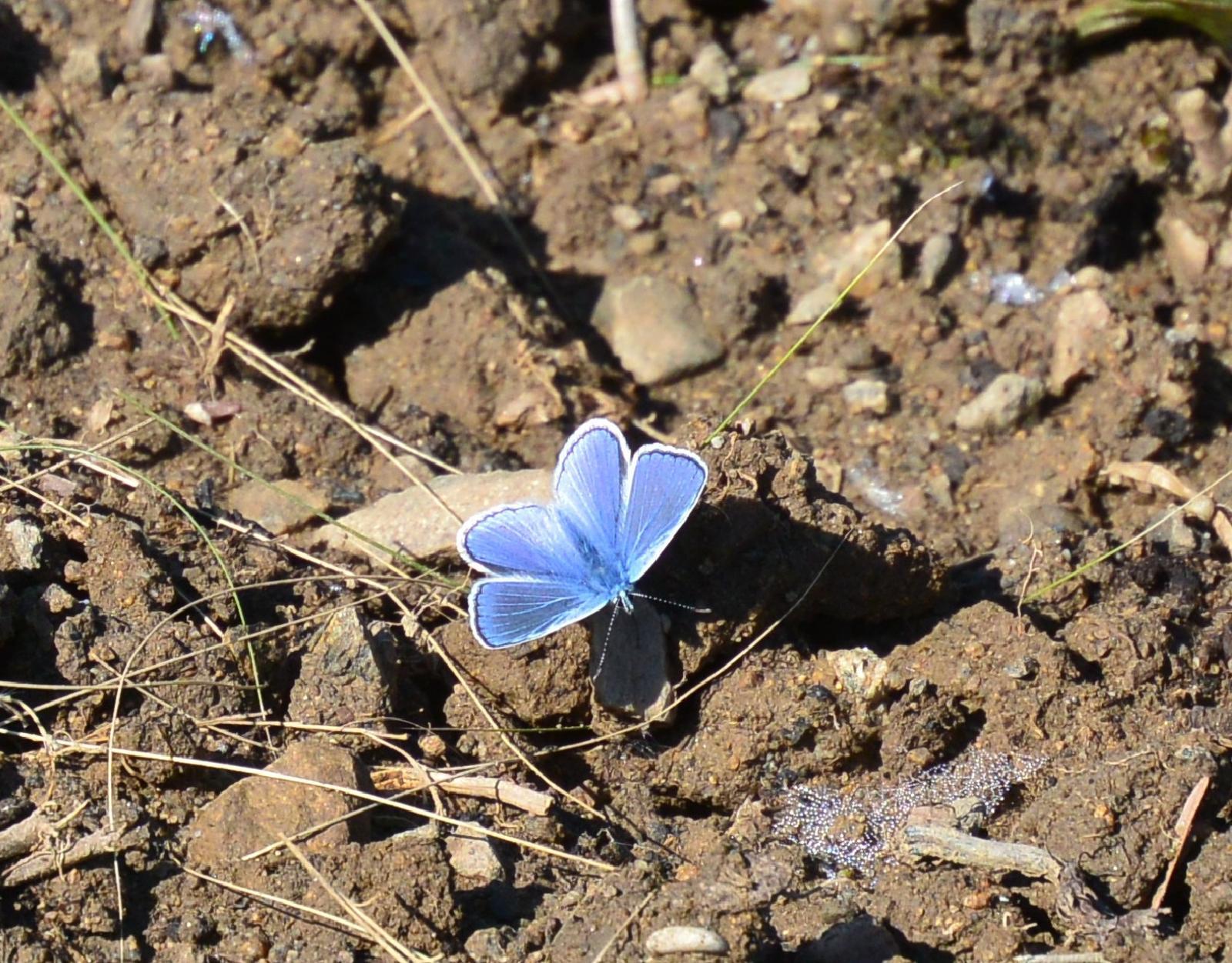 Motýlí zahrada 2019-2020 - Obrázek č. 173