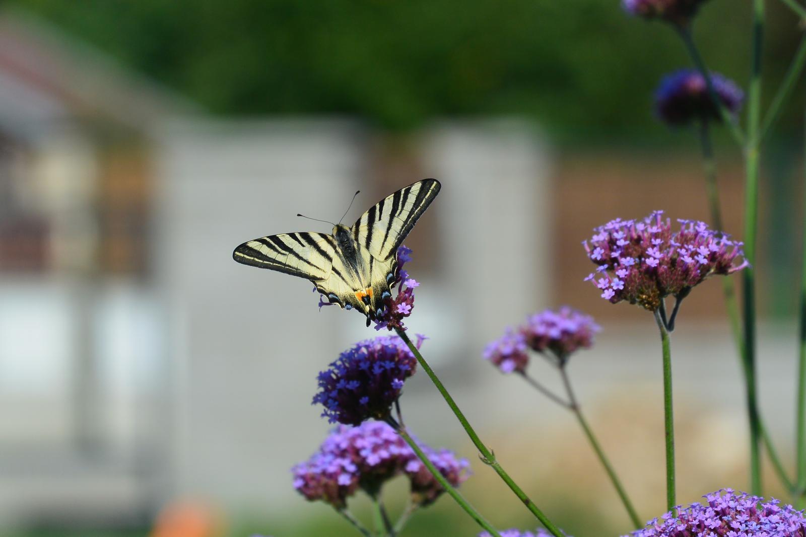 Motýlí zahrada 2019-2020 - Obrázek č. 229