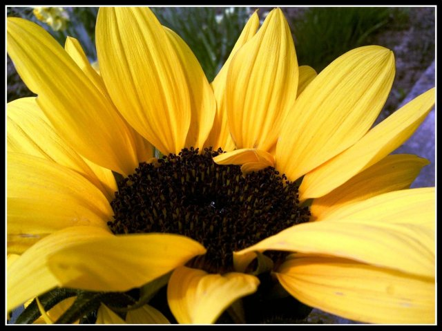 Moje najobľúbenejšie kvetinky - Obrázok č. 36