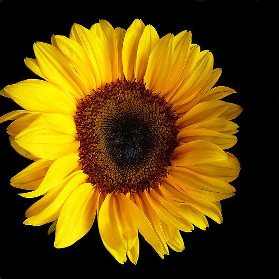 Moje najobľúbenejšie kvetinky - Obrázok č. 38