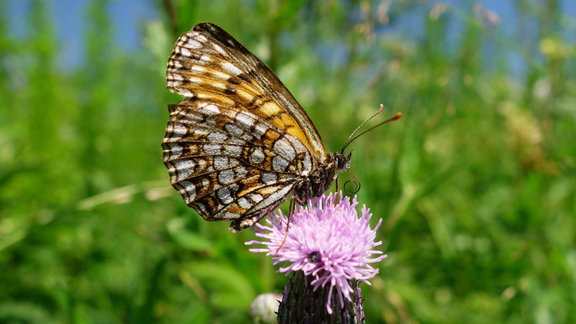 Motýle-spomienka na leto - Obrázok č. 1