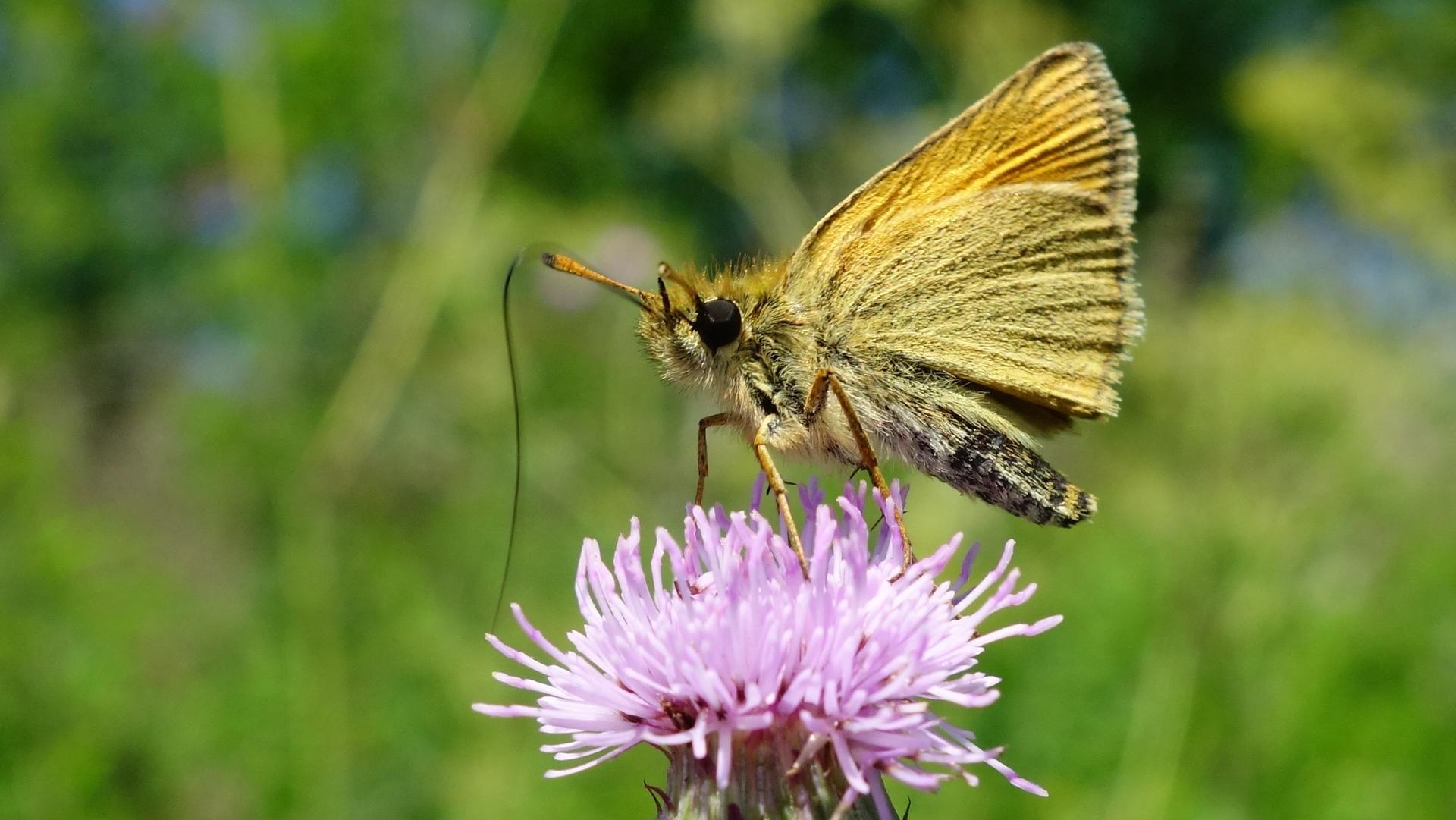 Motýle-spomienka na leto - Obrázok č. 2