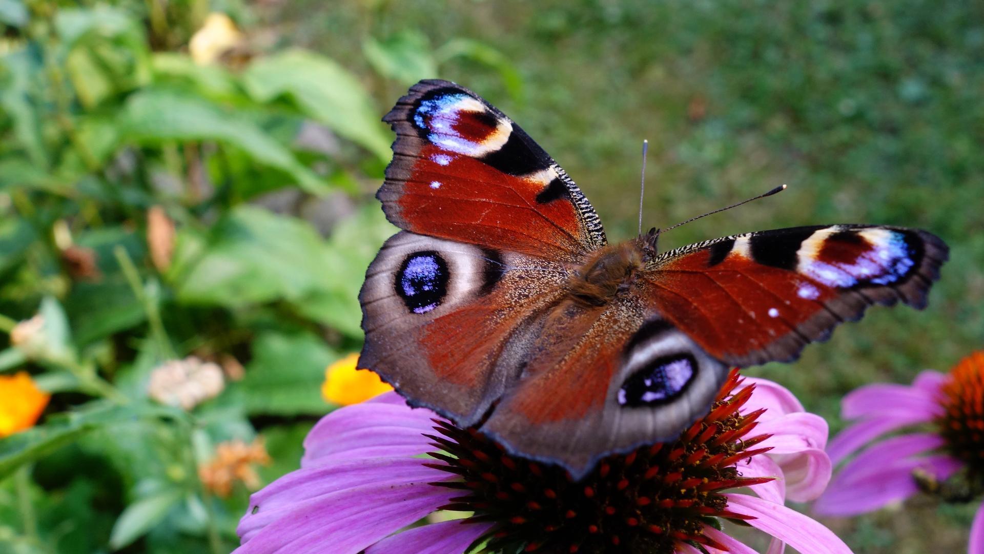 Motýle-spomienka na leto - Obrázok č. 3