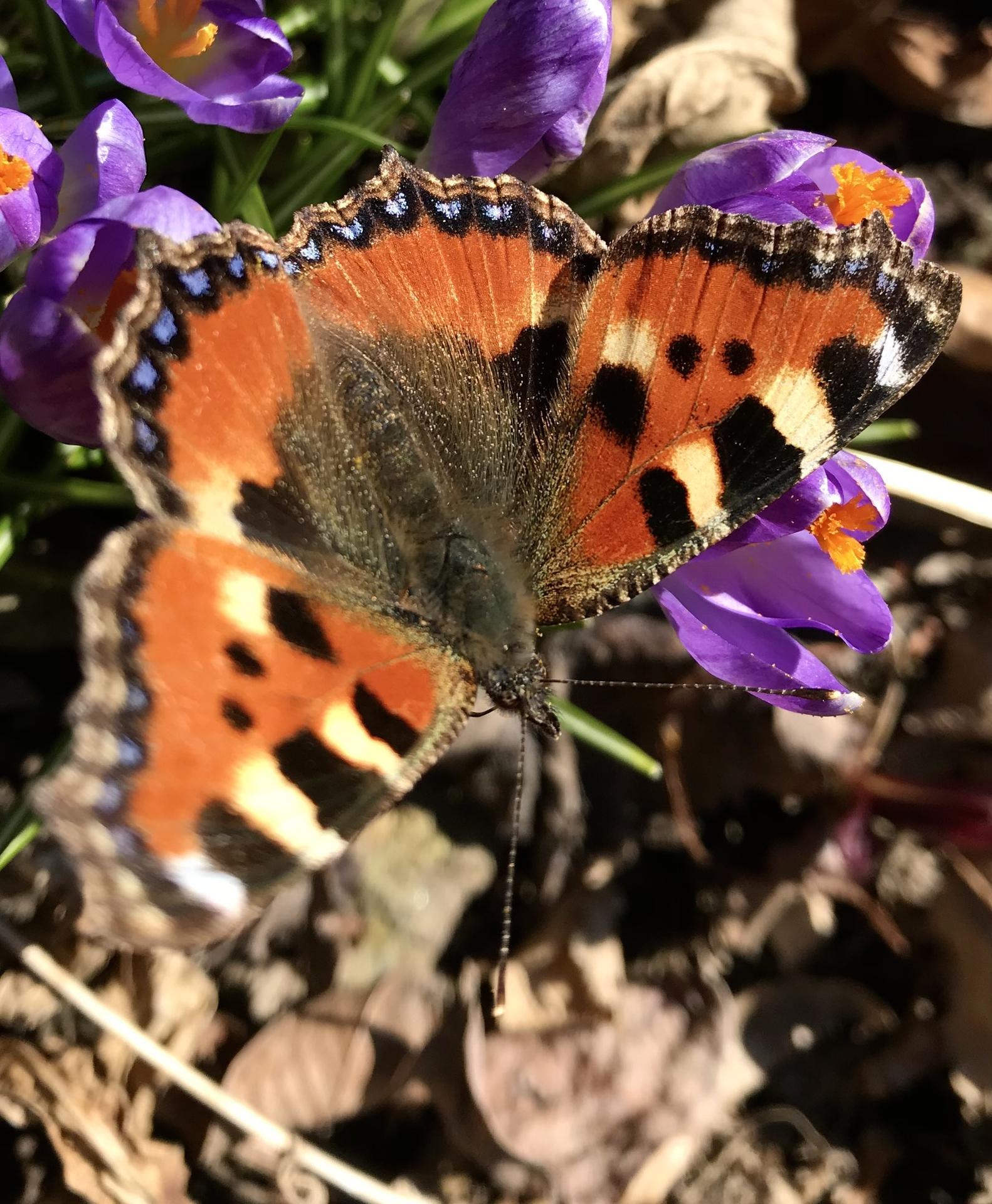 Predvčerom na zázhradke...aj s prvým motýľom. - Obrázok č. 1