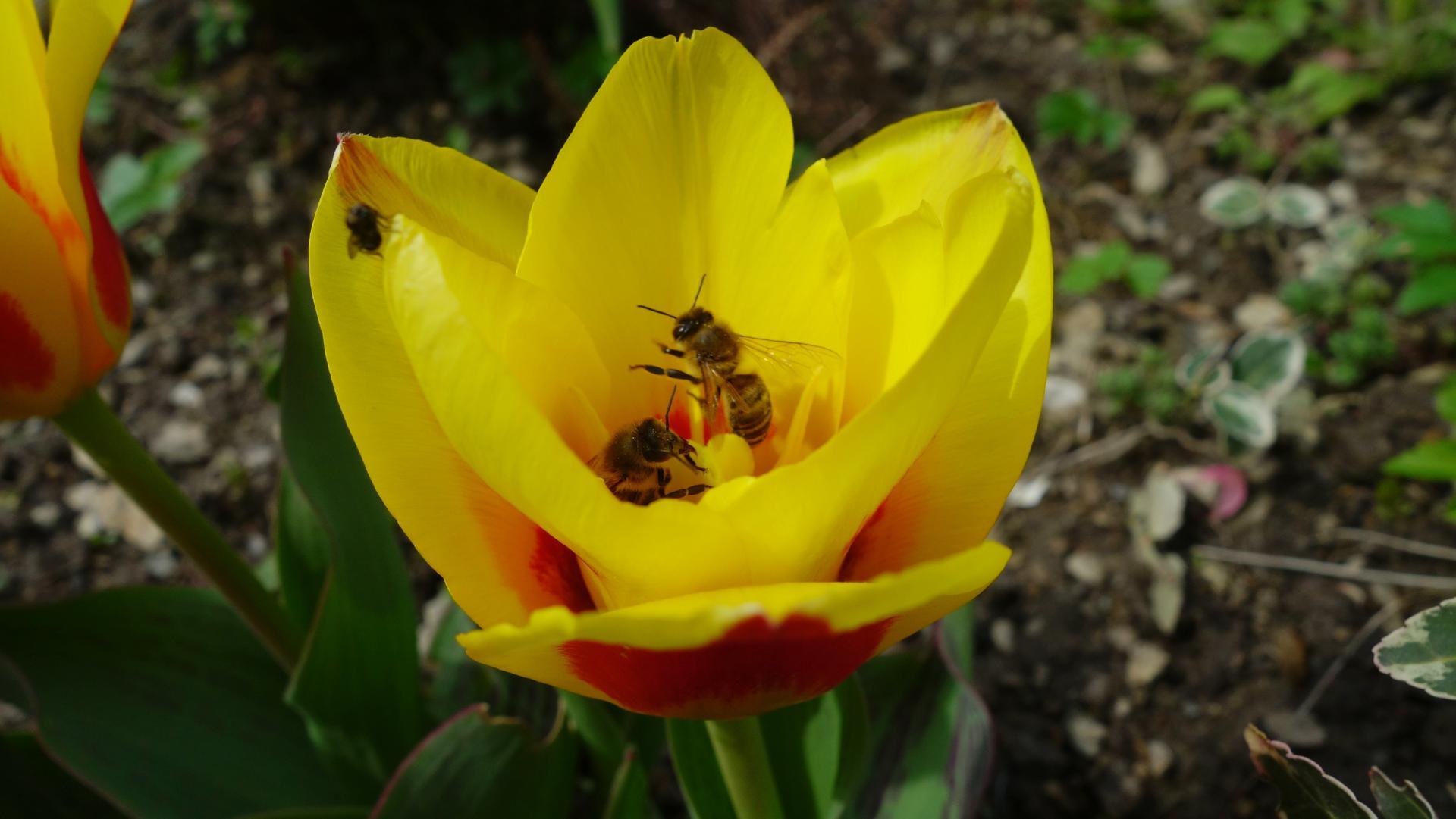 Dnes na záhradke - Obrázok č. 5