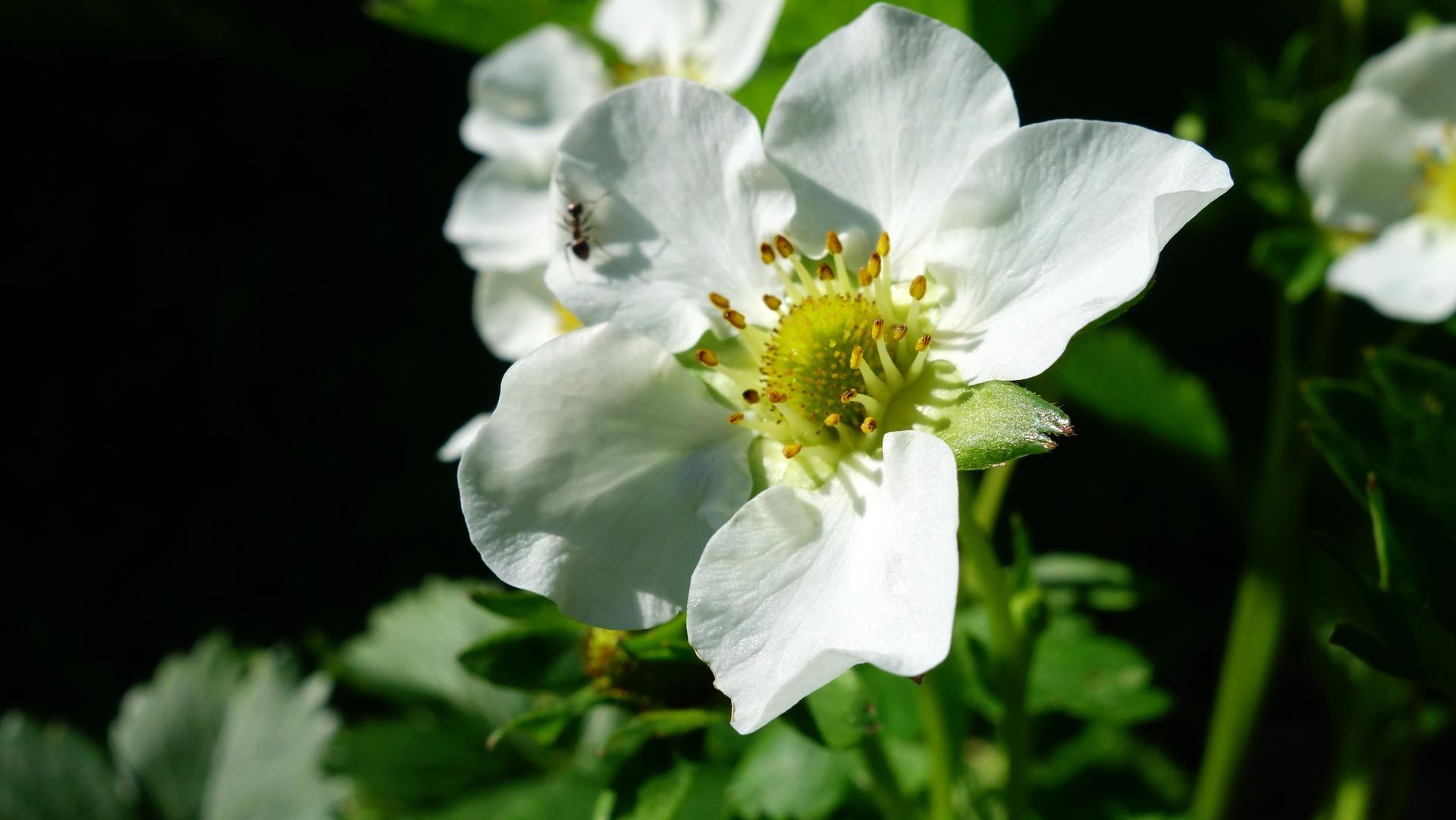 Oteplilo sa aj kvety ožívajú... - Obrázok č. 3