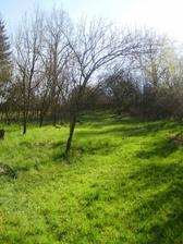 Záhrada v strašnom stave, skoro všetky stromy padli