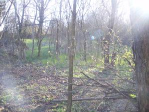 ako v lese