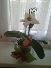 Vianočná orchidea
