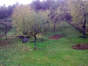 Tak pol na poli,polka pohrabaná a polka ešte predo mnou ale aj tak je ešte veľa listov na stromoch,takže isto bude repete....
