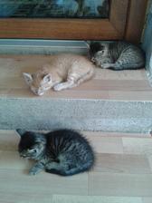 poobedná siesta :)