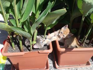 a kde sa lepšie blázni ako v mojich kvetinách :)