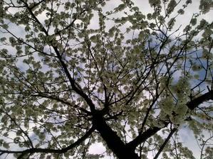 Jar u nás