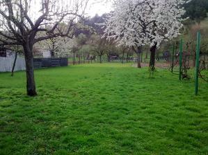"""Naša""""mini""""záhrada pred akciou"""