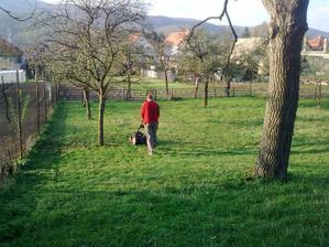 Doteraz nám kosili 3 ovečky-Miško-Maťko-Kubko,ale tento rok si musí trávnik oddýchnuť od ovečiek tak zabeháva kosačka