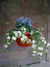 Kvetinky na terase