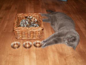 náš asistující kocourek Baloo, nikde nesmí chybět :-)