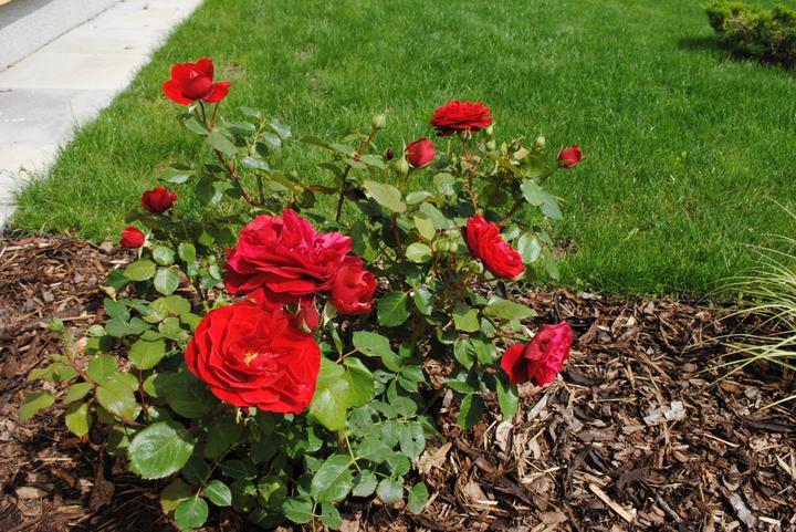 Záhrada júl 2012 :-) - Obrázok č. 35