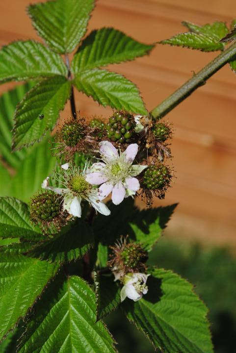 Záhrada júl 2012 :-) - sadili sme ich túto jar 2012