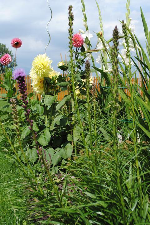 Záhrada júl 2012 :-) - Obrázok č. 37