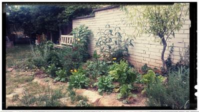 Tak ide cas.... Tesim sa z kazdeho cm, zahon sadeny na jar, vytvori zakutie s lavickou... Sadene rudbekie, echinacea, floxy, margarety, perovskia, santolina, levandula, salvia, cierne ribezle, v pozadi muchovnik, buddleja, pajazmin