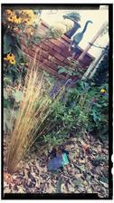 Zamulcovane zahonky,  preriedene,  doplnene,  keria narastla meter za polroka a druhy raz kvitne,  salvie su v kvete od maja