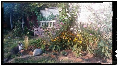 Doplnene nové druhy,  pribudli i zvieratá,  nieco bude vidno az o rok,  pozadi je novy zahon,  hortenzia limelight,  vajgela suzanne,  ponytail,  echinacee,  perovskia,  flox