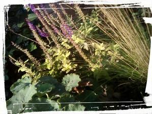 Salvia nemorosa kvitne uz od maja doteraz, piaty mesiac