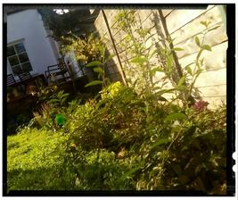 Zivy plot podrastol, tesim sa na nove prirastky, som spokojna :-D