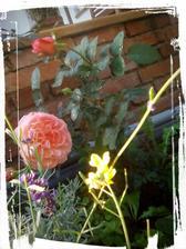 Kvety rukoly pri francuzskej kraske pocas babieho leta
