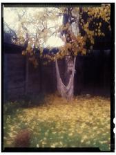Tuto jesen vnimam velmi intenzivne vdaka vlastnej zahrade a jej premene....