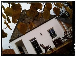 Spod marhulky v jeseni