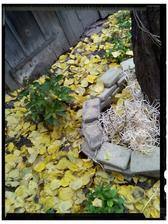 Hortenziovy kutik ma naplna velkym ocakavanim v roku nasledujucom ;-)  ma idealne podmienky ;-)