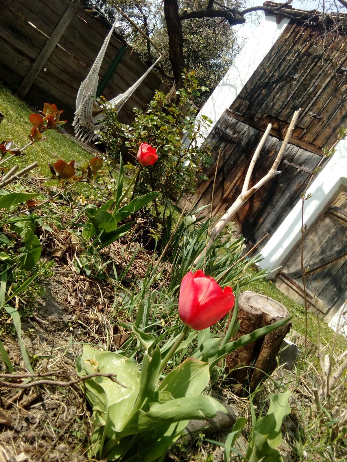 Hradek v roku 2019+2020 - Ja som vám veľký pán, červený som tulipán