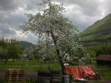 jabloňka a trošku z kopca