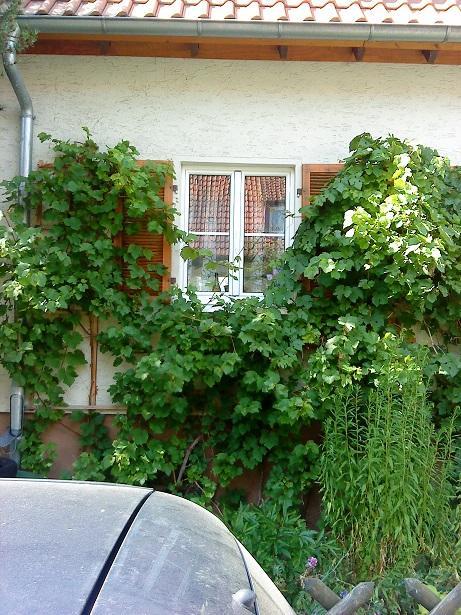 #okenice, okeničky a spol. - schované v zeleni sú krásne