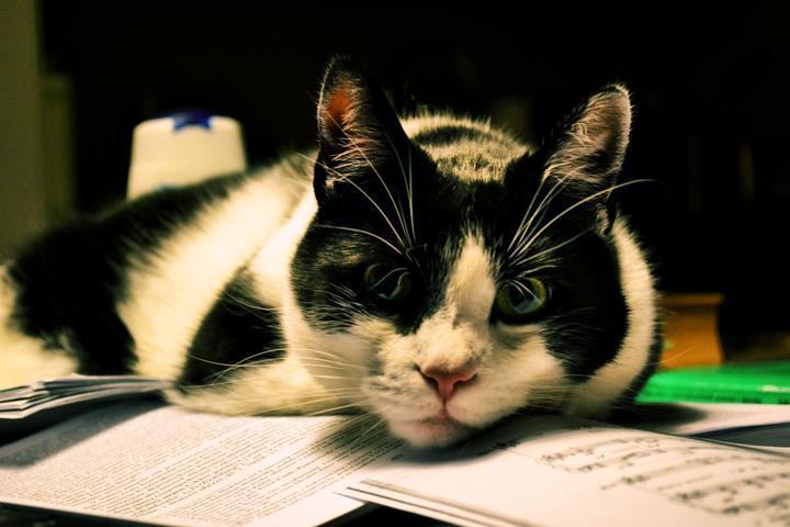 Čo robím, keď mam písať diplomovku... - fotim mojho kocura, ako mi lezi na vsetkych papieroch a materialoch