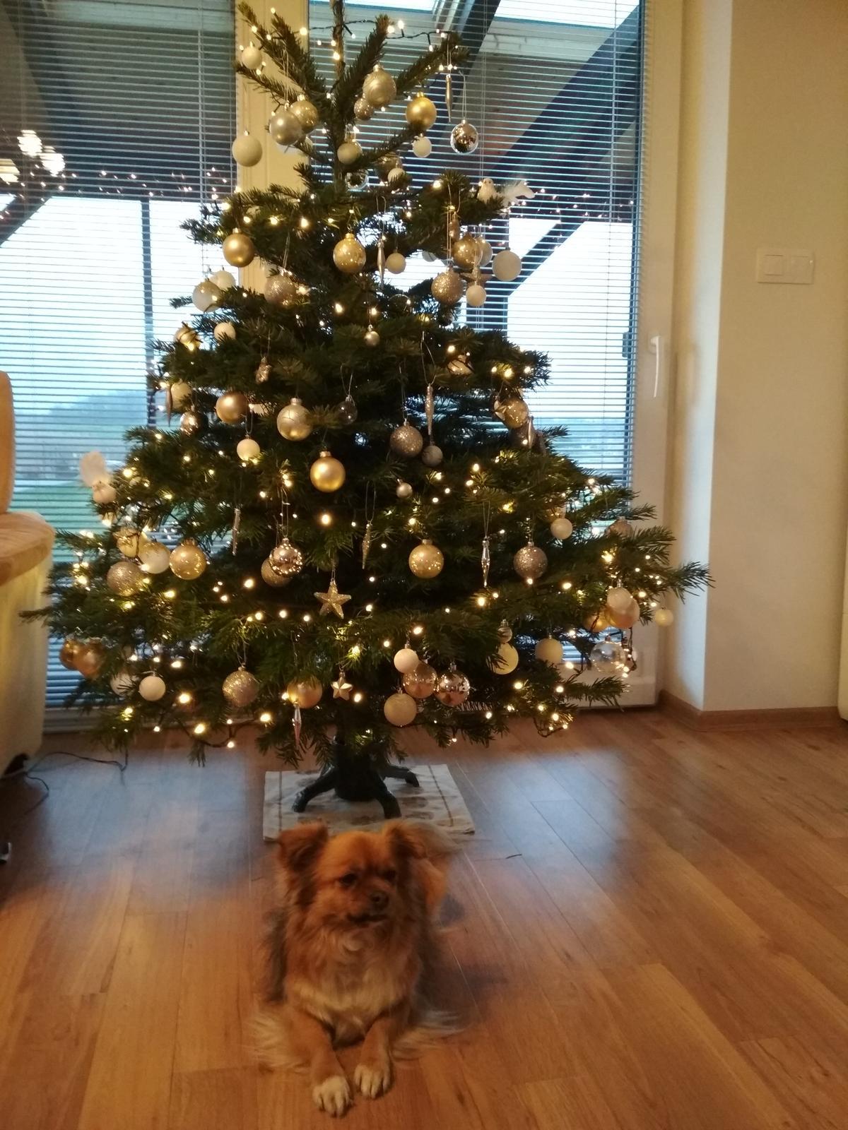 Hezké Vánoce všem na... - Obrázek č. 1